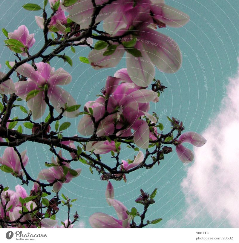 Sky Nature Plant Green Beautiful White Relaxation Flower Red Clouds Environment Spring Blossom Garden Pink Jump