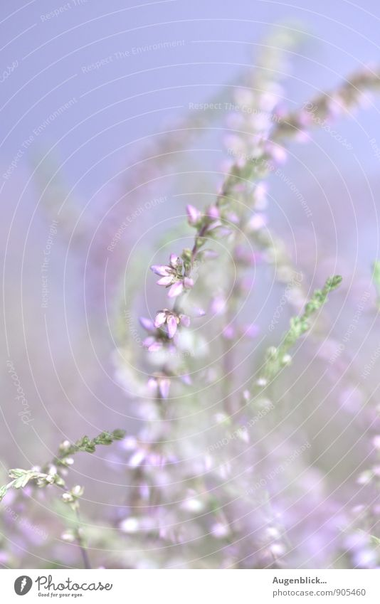 ethereal Nature Summer Wild plant Meadow Field Discover To enjoy Illuminate Dream Fresh Glittering Infinity Blue Green Pink White Spring fever Life Idyll