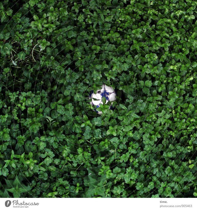 Nature Plant Summer Landscape Environment Lanes & trails Sports Lie Park Bushes Wait Foot ball To fall Network Attachment Discover