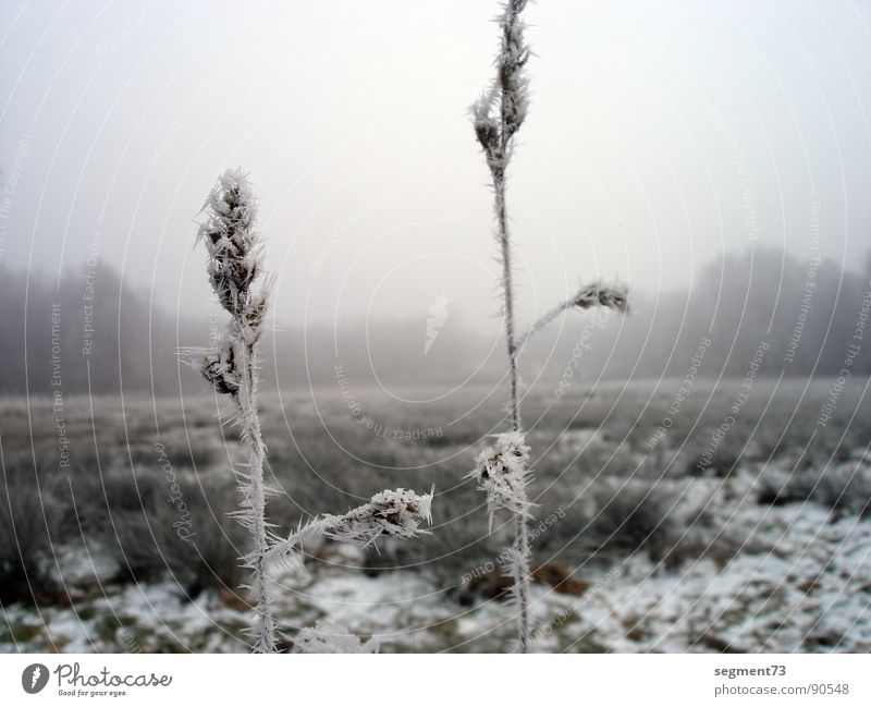 2 stalks Grass Blade of grass Field Meadow Ice age Fog Calm Pure Blur Hoar frost Large Small Thin Winter Sporting event Competition winches Idyll Frost