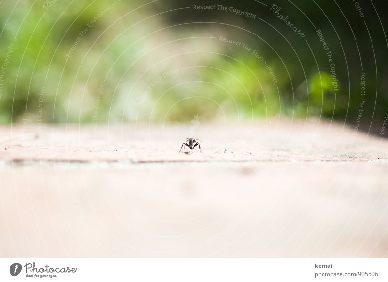 Green Loneliness Calm Animal Small Wild animal Sit Wait Individual Observe Insect Ant