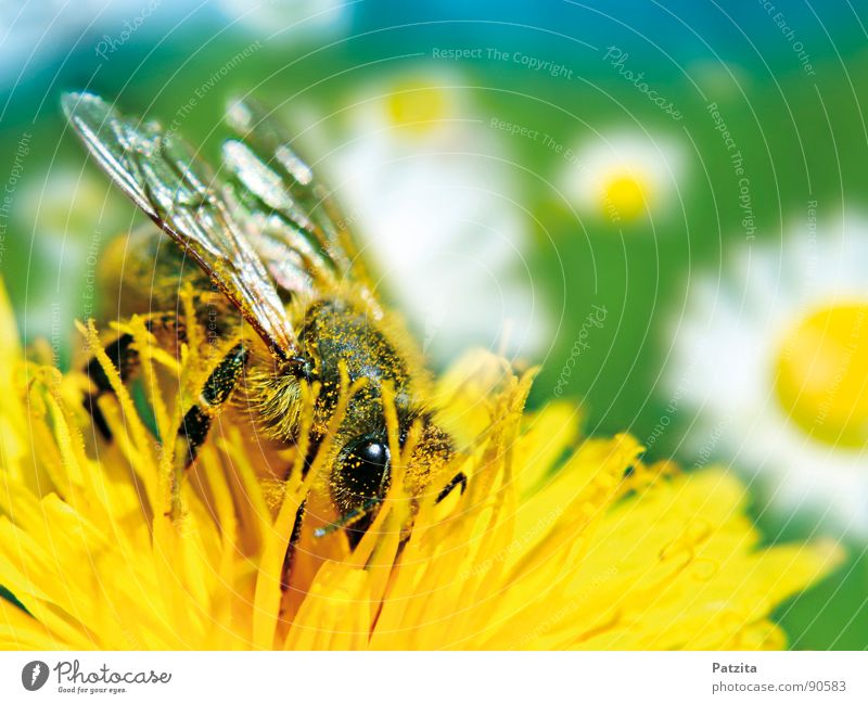 Sky White Sun Flower Green Blue Summer Yellow Meadow Blossom Spring Flying Near Bee Dandelion Collection