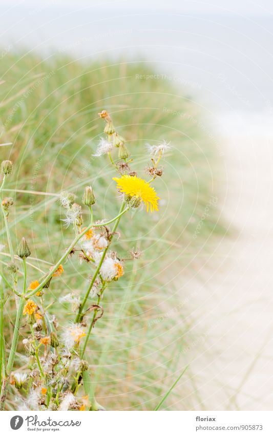 Nature Vacation & Travel Plant Relaxation Ocean Flower Beach Far-off places Environment Yellow Blossom Grass Happy Freedom Sand Tourism