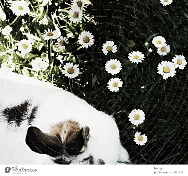 Nature White Green Animal Meadow Grass Spring Fear Near Ear Peace Pelt Curiosity Listening Brave