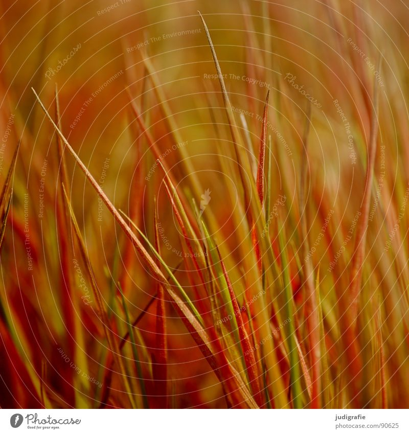 grass Grass Meadow Yellow Stalk Blade of grass Summer Wind Nature Gold Orange Line Structures and shapes tufts Point