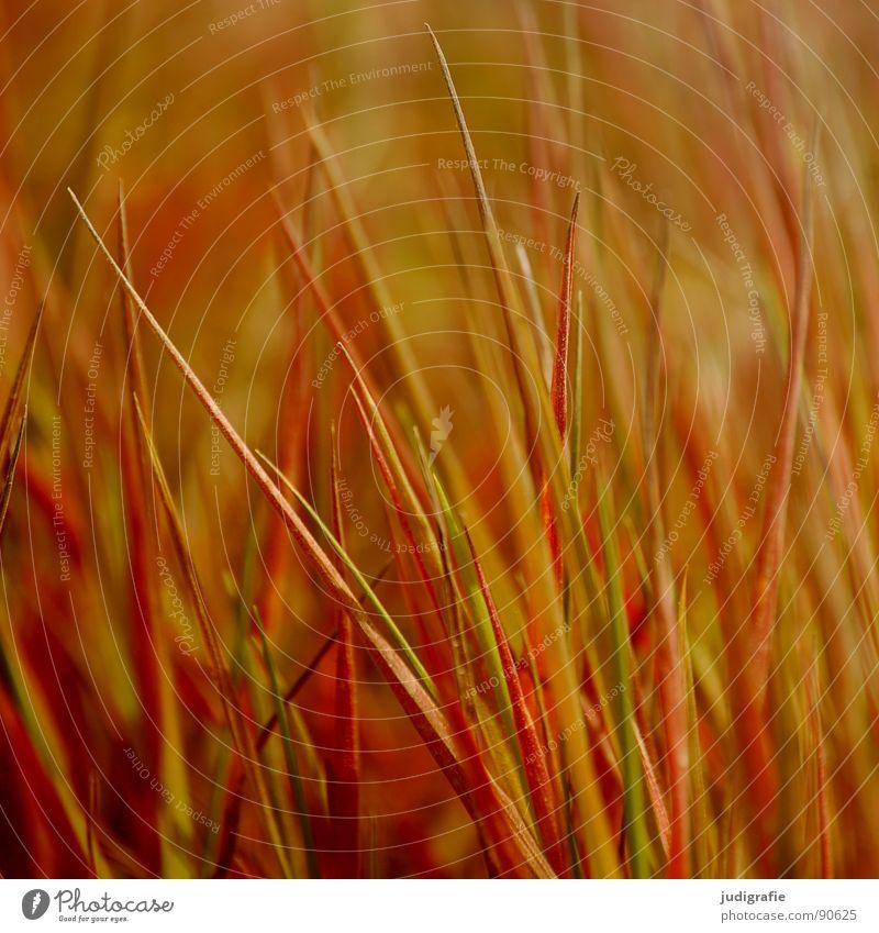 Nature Summer Yellow Meadow Grass Line Orange Wind Gold Point Stalk Blade of grass