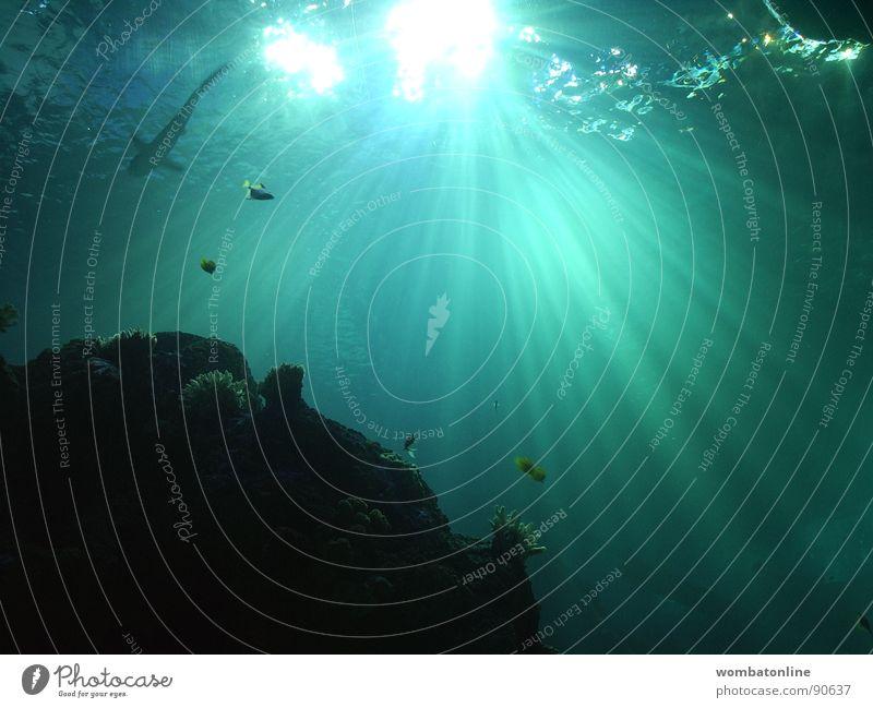 Blue Water Green Sun Ocean Lighting Watercraft Fish Dive Aquarium Shark