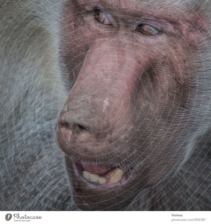 Animal Observe Facial expression Zoo Monkeys Apes Baboon