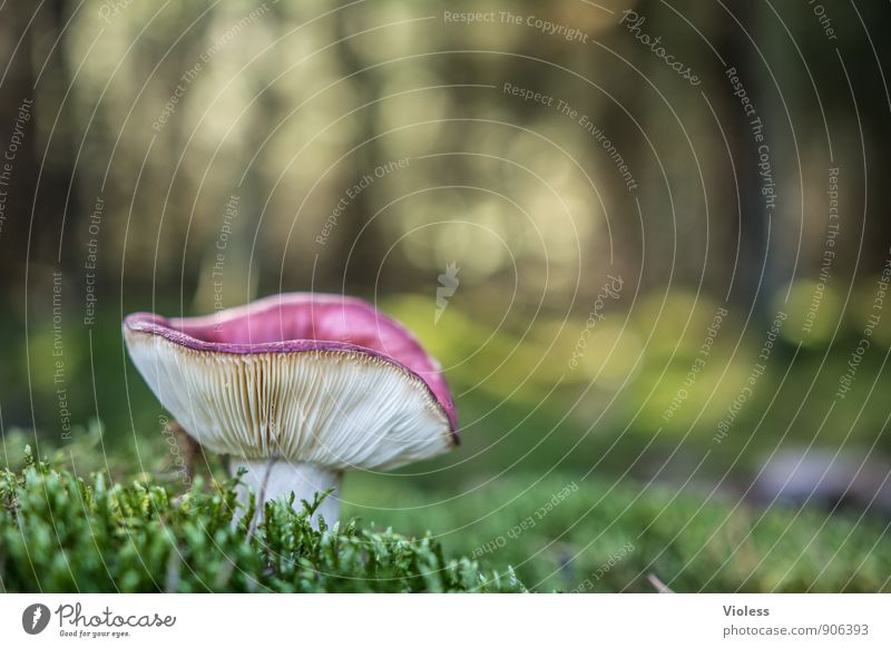 Nature Plant Green Landscape Forest Environment Natural Grass Moss Mushroom Woodground Amanita mushroom
