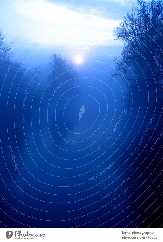 Nature Blue Tree Sun Ocean Calm Forest Landscape Coast Dream Lake Waves Horizon Fear Fog River