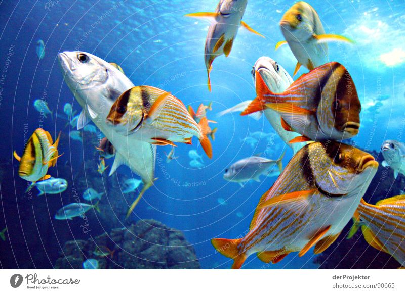 There's fish Tuna fish Ocean Portugal Aquarium Fish drift about in many colours ocenario EXPO 1998 Water Flock Basin Glas facade boring photo unimaginative