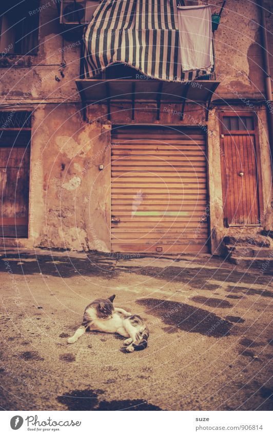 Cat Vacation & Travel City Relaxation Animal House (Residential Structure) Travel photography Street Facade Tourism Lie Wild Dirty Gloomy Authentic Wait