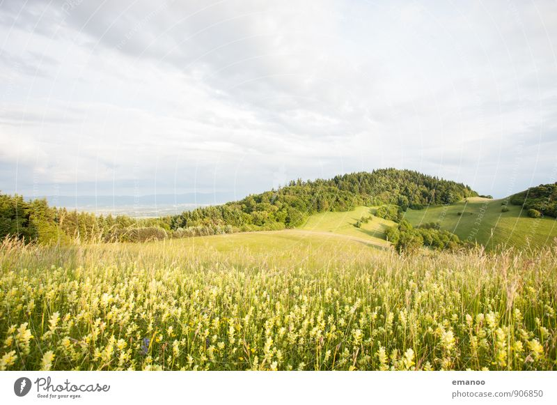 Kaiserstuhl light Vacation & Travel Tourism Trip Far-off places Mountain Hiking Nature Landscape Plant Sky Clouds Spring Summer Climate Weather Flower Grass