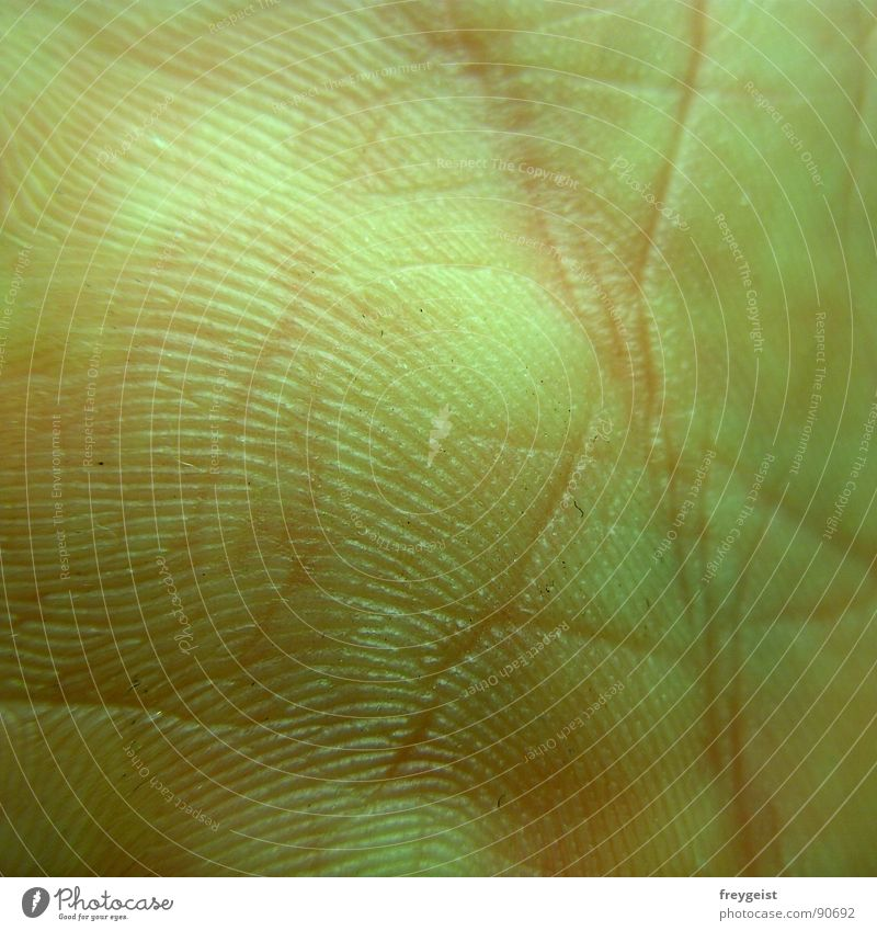 Hand Joy Life Healthy Pink Skin Near Footprint Rachis Normal Organ Fingerprint