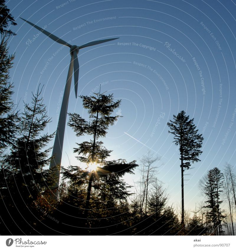 Wind power at Roßkopf 3 Sky Coniferous trees Forest Sky blue Geometry Deciduous tree Perspective Coniferous forest Glade Paradise Clearing Wind energy plant
