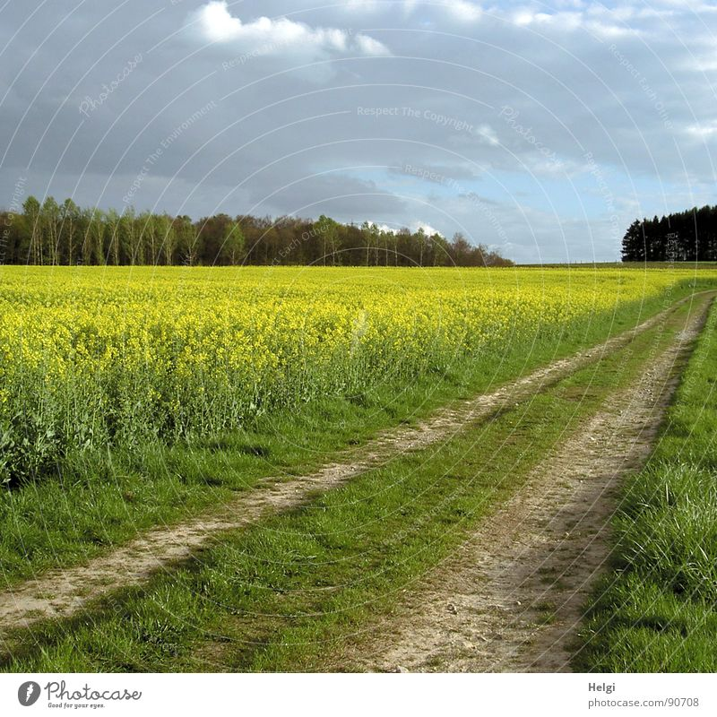 rural landscape with rape field, field path and trees in the background under cloudy skies Colour photo Multicoloured Exterior shot Deserted Copy Space top Day