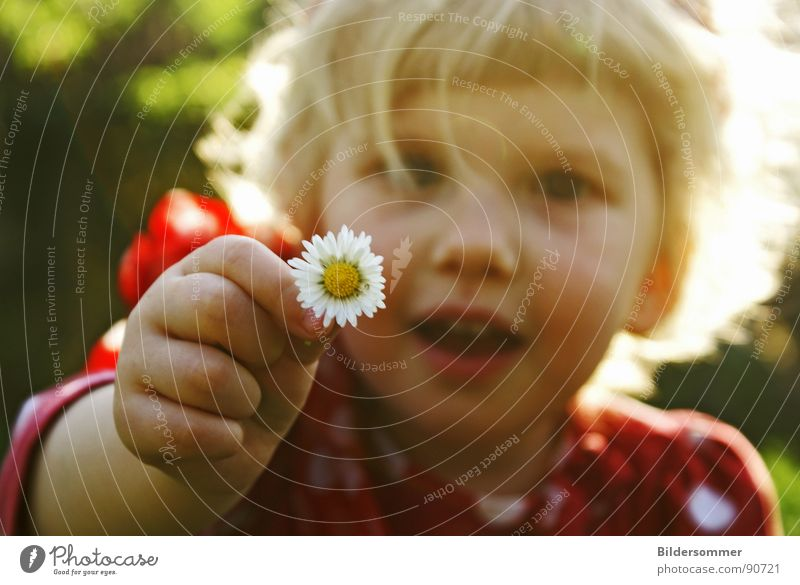 Child Girl Sun Flower Red Meadow Laughter Hair and hairstyles Blonde Small Circle Point Sweater Daisy Polka