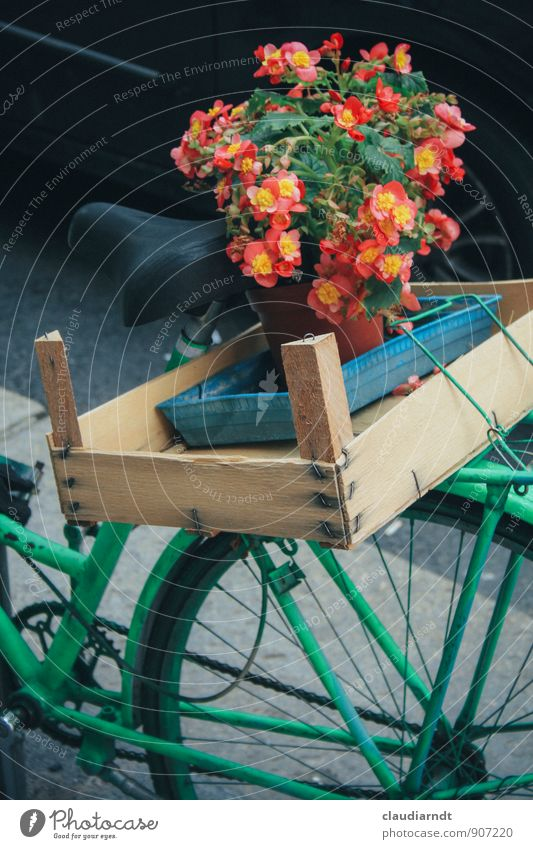 Begonia Express Plant Flower Blossom Cycling Driving Green Red Logistics Bicycle luggage carrier Bicycle saddle Crate Wooden box bicycle basket Flowerpot