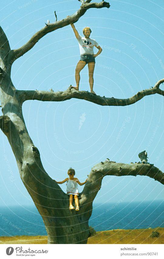 climbing tree Hot pants Climbing tree Tree Playing Father Child Summer Joy Sky Dried