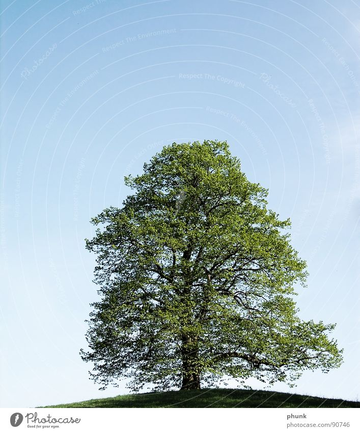 pruning Tree Hill Green Maturing time Growth Healthy Spring Sky Blue Floor covering Nature Love of nature