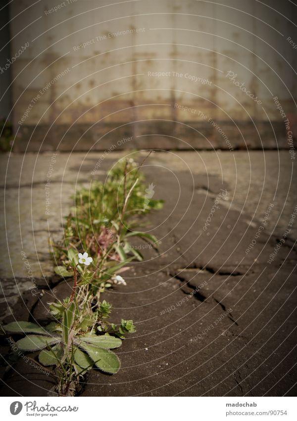 VEGETABLES Environment Nature Plant Flower Bushes Concrete Fight Trashy Green Joie de vivre (Vitality) Power Loneliness Climate Survive Environmental pollution