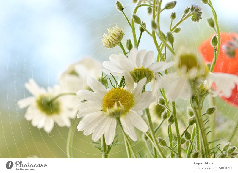 Nature Flower Together Field Living or residing Success To enjoy Beautiful weather Cloudless sky Fragrance Hang Wild plant