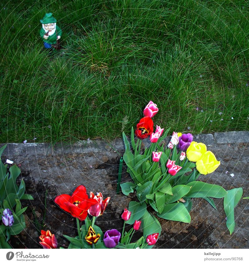 death strip Garden gnome Masculine Petit bourgeois Tulip Green space Grass Traces of fomer wall Wall (barrier) No man's land Border guard Pankow Border area