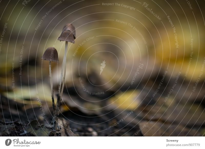 fragile Nature Landscape Plant Earth Autumn Mushroom Mushroom cap Forest Growth Thin Small Brown Yellow Optimism Serene Patient Calm Delicate Fragile