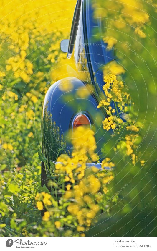 Nature Sun Blue Plant Yellow Colour Spring Car Warmth Field Clean Physics Mirror Beetle Vintage car