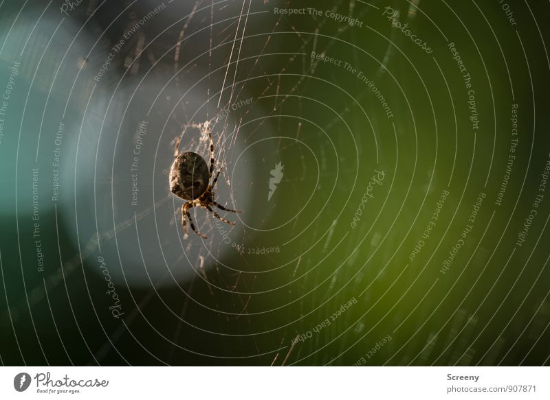 Nature Animal Forest Small Brown Fear Wild animal Wait Dangerous Threat Net Creepy Hunting Hang Build Disgust