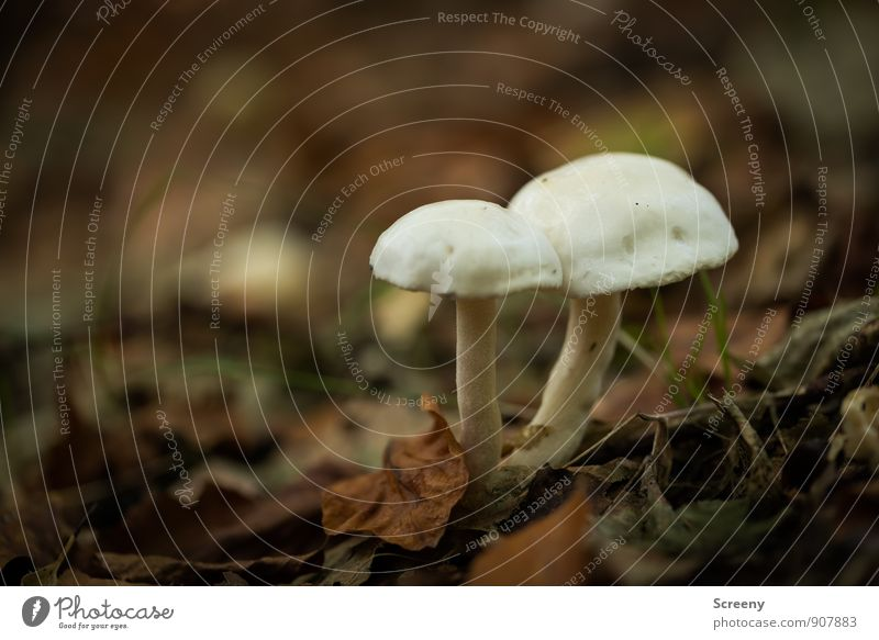 cohesion Nature Plant Earth Autumn Leaf Wild plant Mushroom Mushroom cap Forest Growth Together Small Brown White Friendship Loyalty Serene Patient Calm