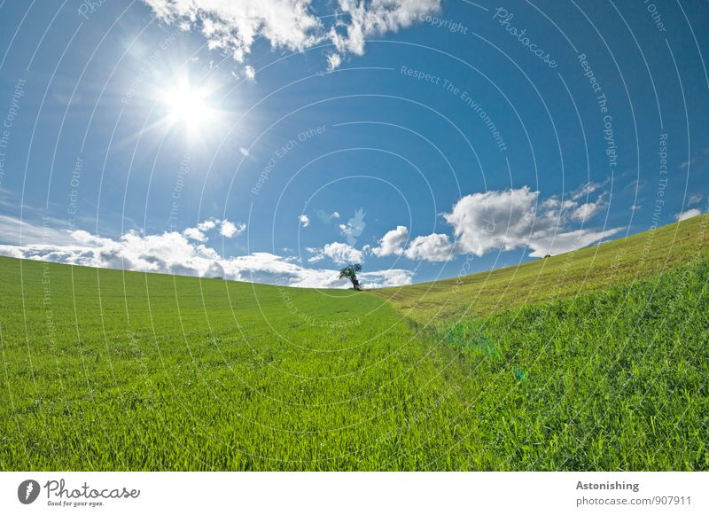 Sky Nature Blue Plant Green White Summer Sun Tree Loneliness Landscape Clouds Environment Yellow Meadow Grass