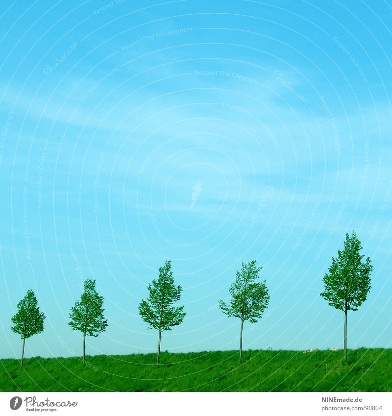 Sky Nature Blue Green Tree Summer Leaf Clouds Meadow Spring Small Line Horizon Large Arrangement Crazy