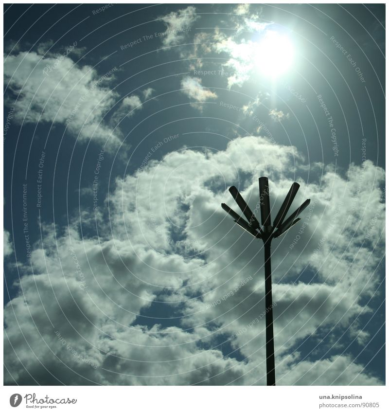 fleur Sun Sky Clouds Blossom Traffic infrastructure Blue White Lantern Street lighting Lighting