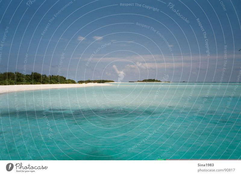 Water Ocean Summer Vacation & Travel Clouds Loneliness Cold Relaxation Warmth Sand Island Physics Turquoise Palm tree Maldives Blue sky