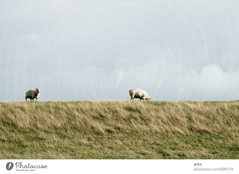 Sky Vacation & Travel Plant Green Landscape Calm Clouds Animal Meadow Coast Grass Gray Freedom Pair of animals Stand Wait