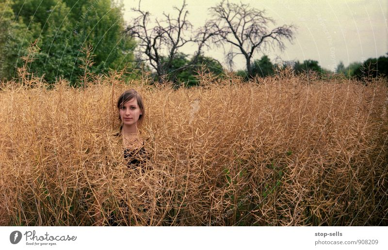giraffe Human being Feminine Head Face Observe Attentive Watchfulness Serene Patient Calm Endurance Unwavering Field Canola field Isolated (Position) Individual