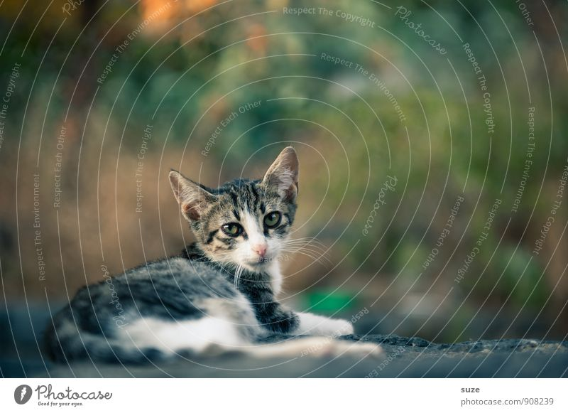 Mafia Mia Miez Nature Animal Pet Cat 1 Baby animal Lie Wait Authentic Beautiful Small Natural Curiosity Cute Wild Italy Sicily Indigenous Southern Domestic cat