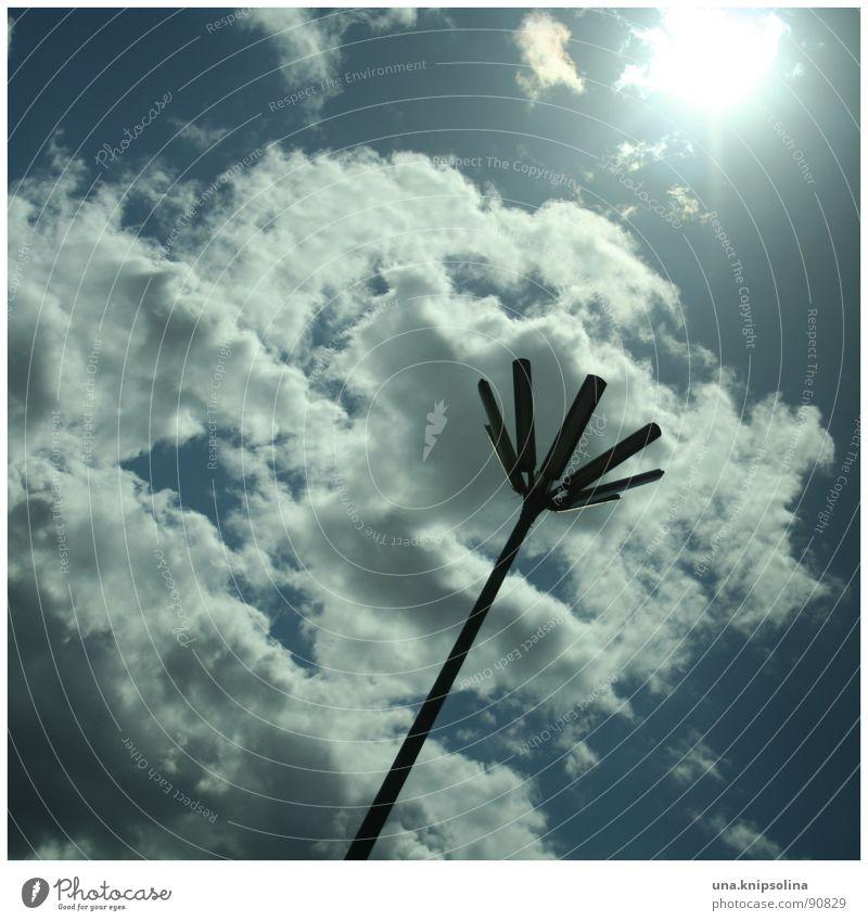 Sky Blue White Sun Clouds Blossom Lighting Crazy Lantern Street lighting