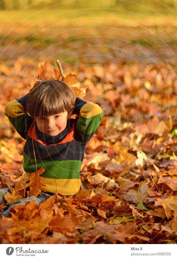 Human being Child Leaf Joy Forest Autumn Emotions Boy (child) Playing Garden Moody Leisure and hobbies Sit Infancy Happiness Smiling