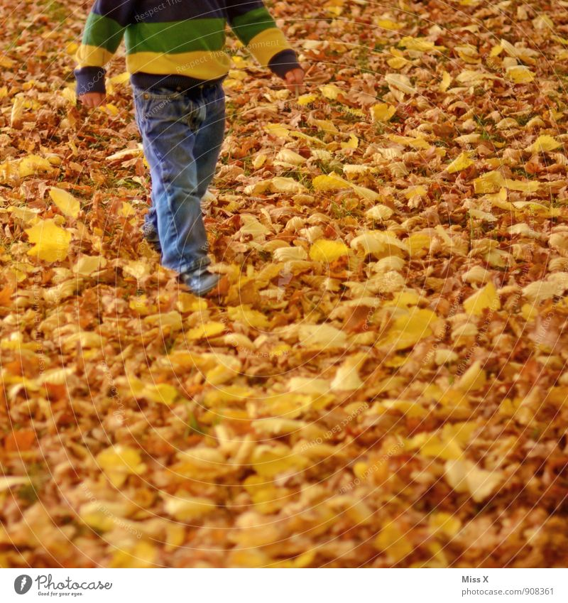 Human being Child Nature Leaf Forest Yellow Autumn Meadow Playing Garden Legs Going Park Leisure and hobbies Infancy To go for a walk
