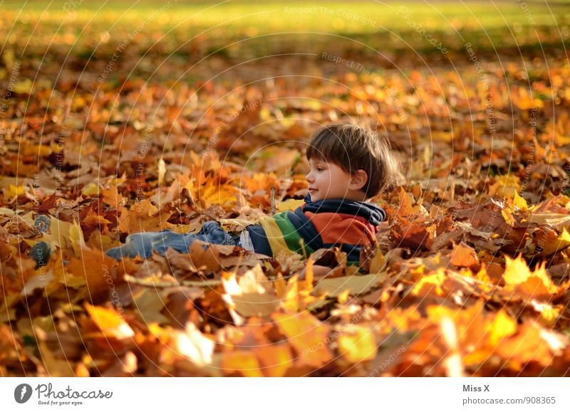 Human being Child Leaf Joy Forest Autumn Emotions Boy (child) Playing Garden Moody Lie Contentment Infancy Happiness Smiling