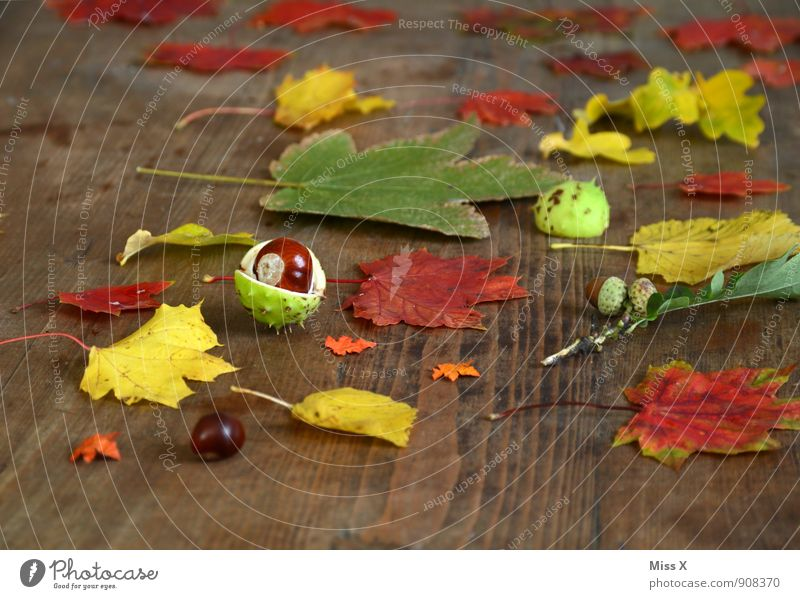 autumn collection Leisure and hobbies Playing Autumn Leaf Collection Wood Multicoloured Chestnut Acorn Maple leaf Wooden table Craft materials Handicraft