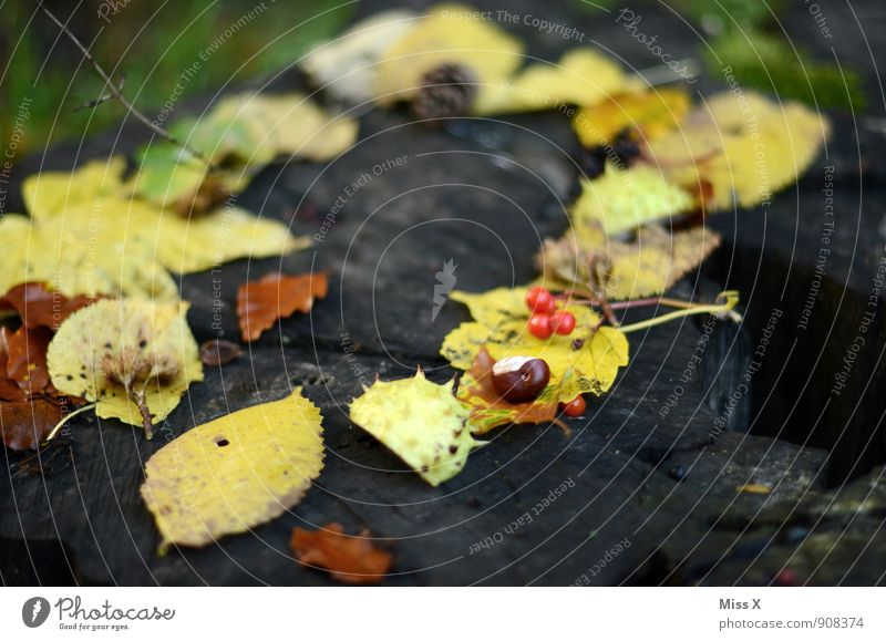 autumn frame Nature Autumn Leaf Yellow Chestnut Rawanberry Circle Frame Autumnal Autumn leaves Autumnal colours Collection Accumulation Wood Early fall
