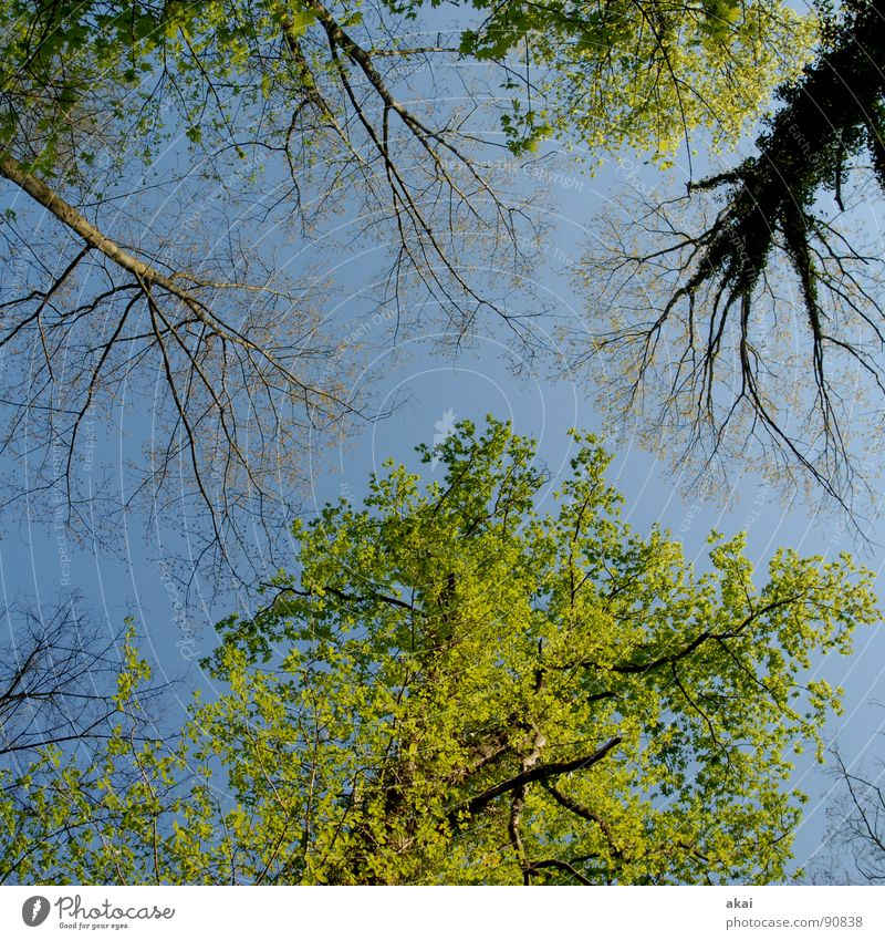 Nature Sky Tree Green Blue Plant Summer Calm Leaf Clouds Colour Forest Life Above Spring Line
