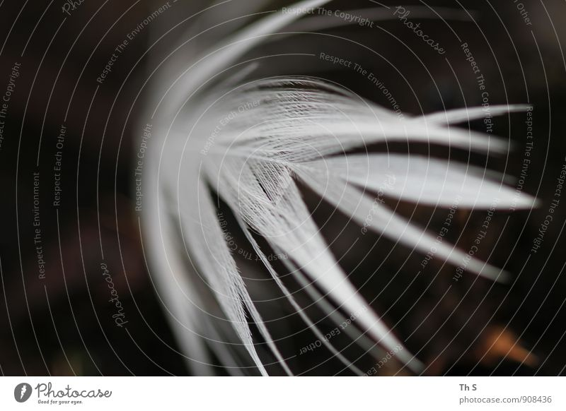 Beautiful White Calm Movement Emotions Flying Moody Bird Dream Wild Elegant Authentic Free Esthetic Feather Wing