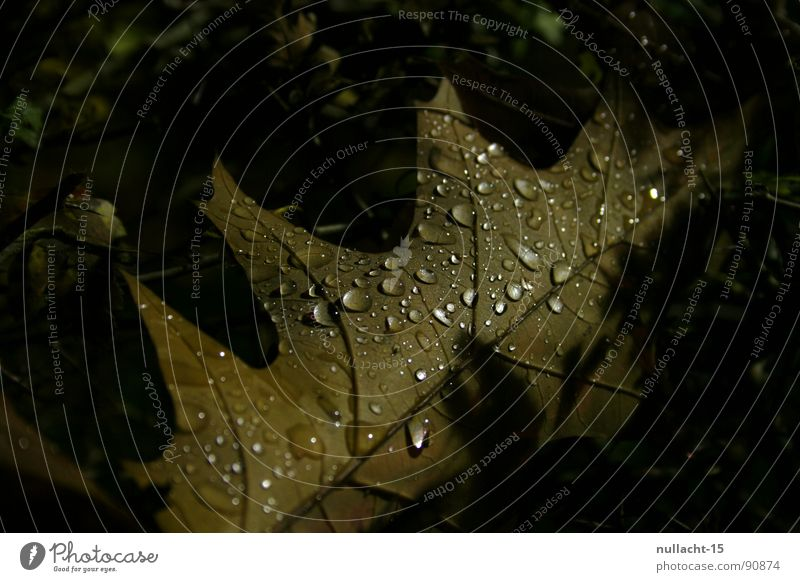 I'm cold Leaf Night Night shot Macro (Extreme close-up) Close-up Autumn Weather Drops of water Water Structures and shapes