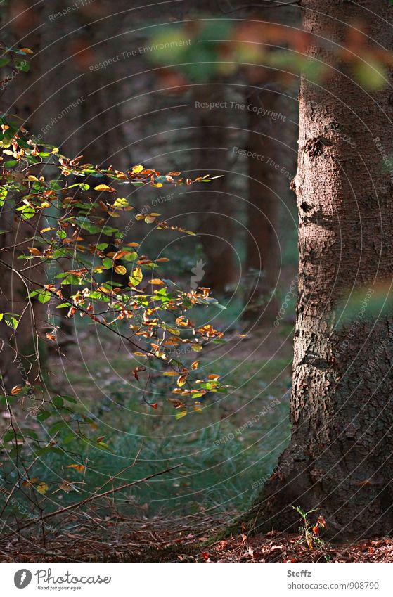The beginning of autumn in the autumn forest Forest plants autumn tree forest bath Automn wood change of seasons Tree trunk Mood lighting certain light