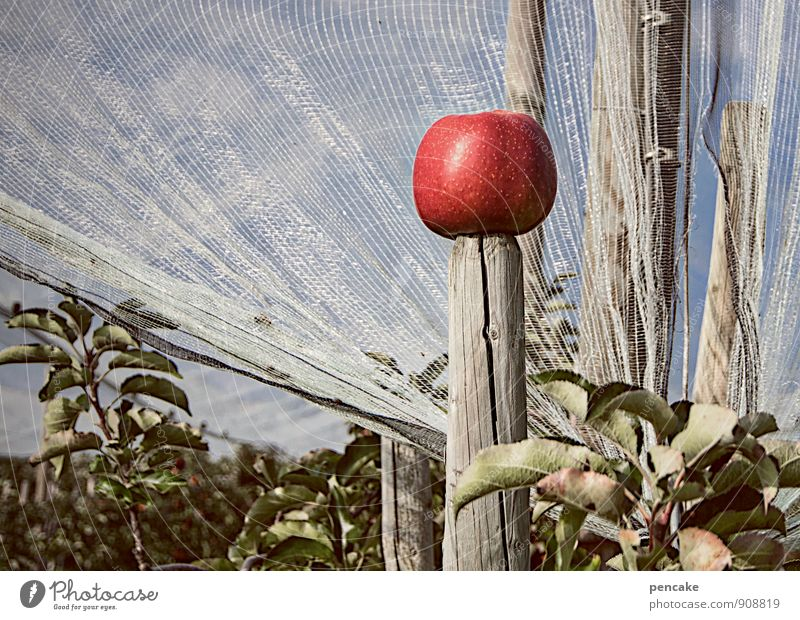 Sky Nature Tree Red Landscape Autumn Business Beautiful weather Elements Uniqueness Net Apple Luxury Select King Agricultural crop