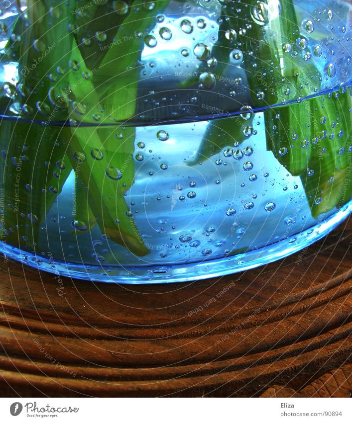 Plant Blue Green Water Flower Wood Exceptional Brown Fresh Decoration Glass Round Stalk Fluid Refreshment Breathe